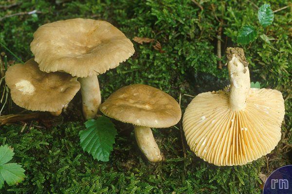 shc31 1 1 an identification of the